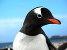 Licznik pingwin�w